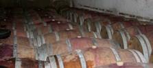 chateau,flotis,fronton,vin,vigne,frontonnais,sud,ouest,cave,vente,achat,négrette